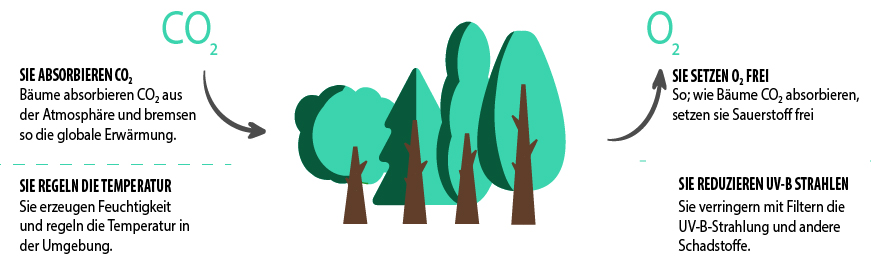 Naeco Reforest - Einen Baum zu pflanzen