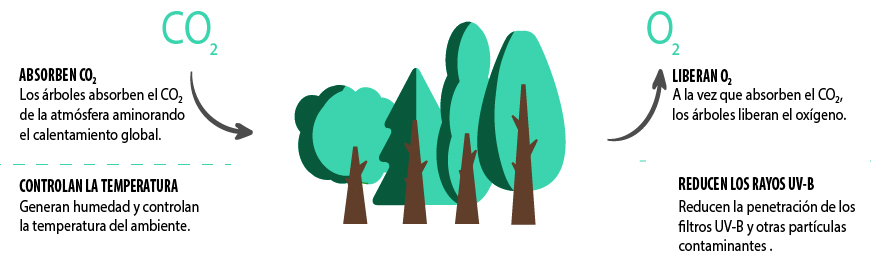 Naeco Reforest - Plantar un árbol