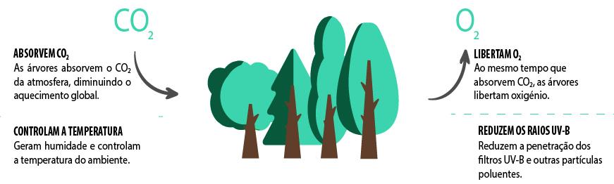 Naeco Reforest - Plantar uma árvore