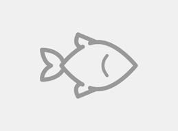 Palets de plástico para pesca