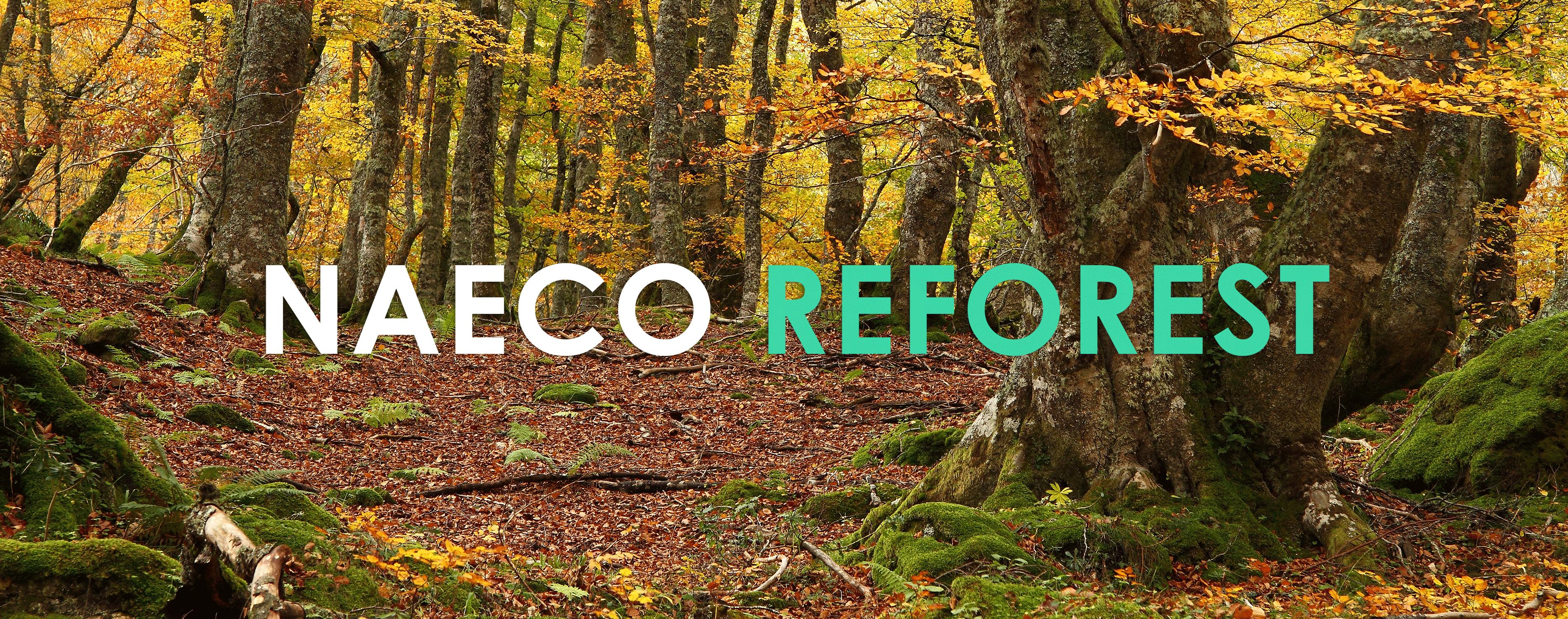 """Naeco lance son projet """"Naeco Reforest"""" pour contribuer à réduire les émissions de CO2 en plantant des forêts."""